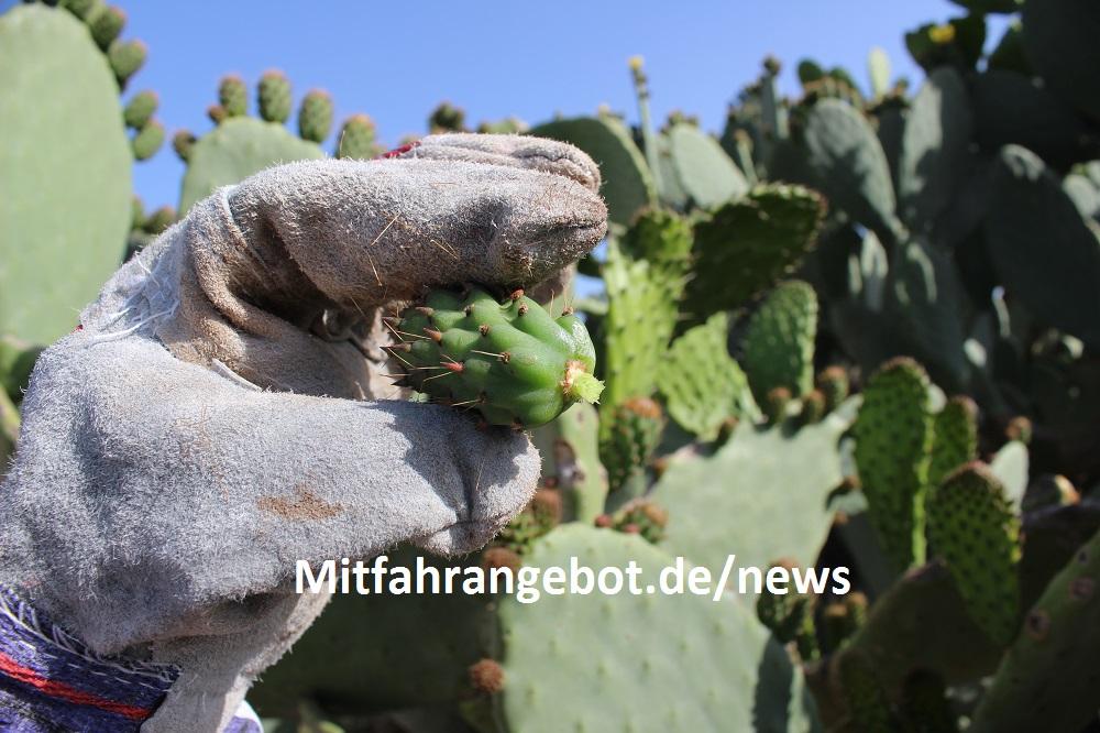 einen baby kaktus aus dem sommer urlaub mit nach hause bringen blog news. Black Bedroom Furniture Sets. Home Design Ideas